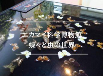 エカマイ科学博物館にある虫や昆虫・蝶々の標本『虫の世界』へ④